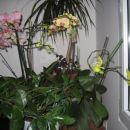 cela zbirka mojih orhidej