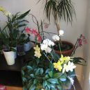 pogled na moje orhideje (mar 08)