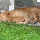 Zaspanček