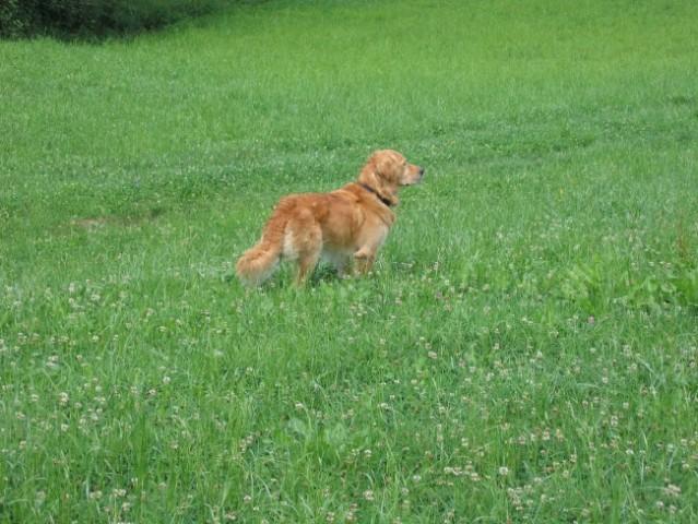 KHAN (julij 2006) - foto