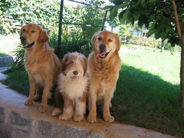 Trije prijatelji