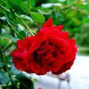 Vrtnica 1 - 30.8.07