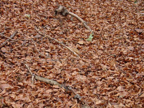 Narava vabi v gozd - foto