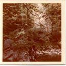 DIVJE JEZERO 1978 5