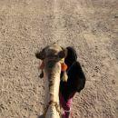 Jahanje kamele