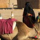 Kamela in beduinka