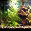akvarij 26.2.08