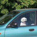 Čakam v avtu