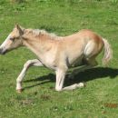 Lučki dedec- Konj 15.8.2007
