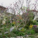 Magnolia - Magnolija