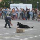 tukaj pa smo gledali kako učijo policijske pse...