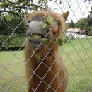 imam lepe zobe?