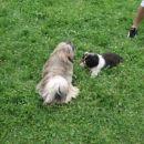 Sunny je bil čist navdušen nad Lino! Ji je sledil kot senca!