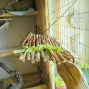 tončijeva doma narejena kletka
