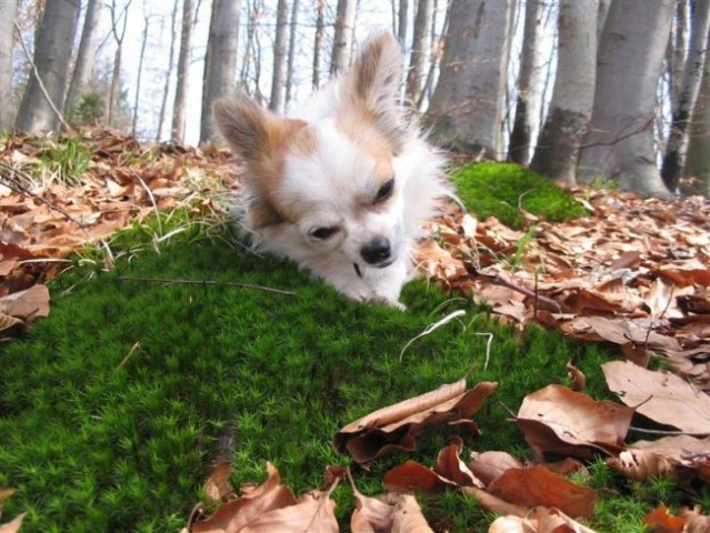 Pomlad v gozdu - foto
