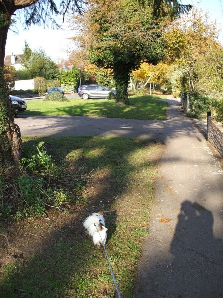Autumn walks - foto