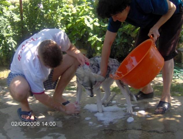 Tea - Avgust 2008 - foto
