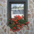 cvetoče okno