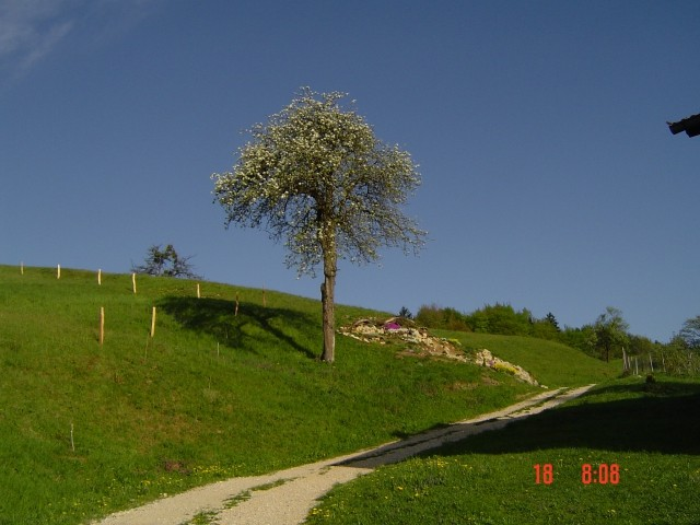 Skalnjak 2009 - foto