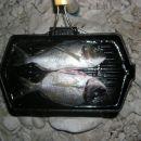 vsakodnevna hrana študentov na morju