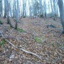 čez bukov gozd