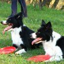 Frisbee seminar 04.04.2008
