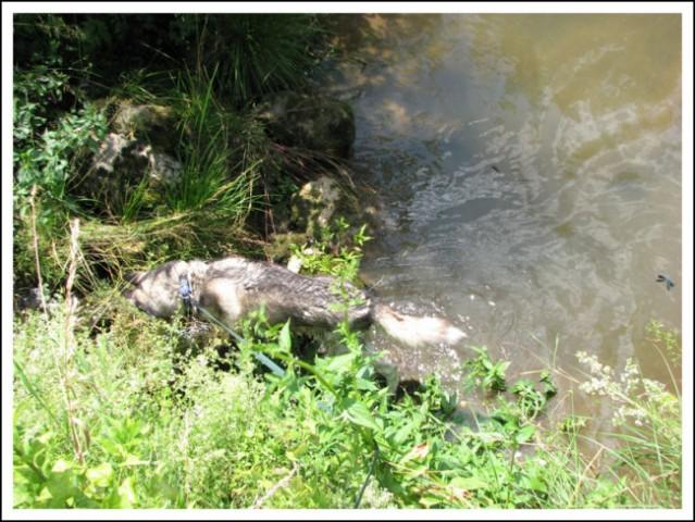Sprehod, 19.06.2007 - foto