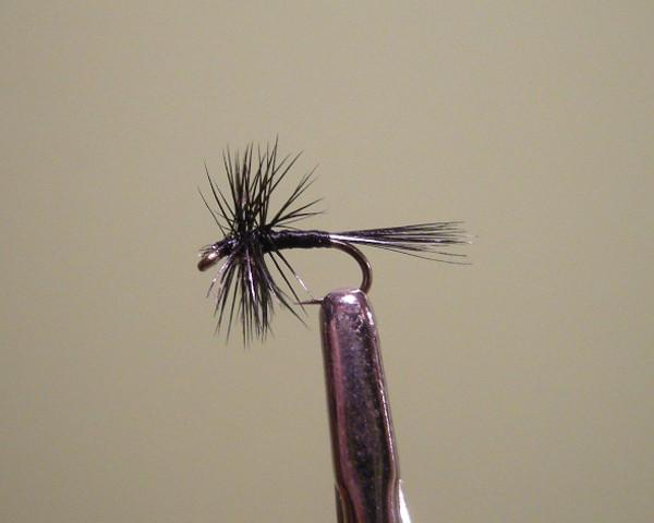 Black middge small