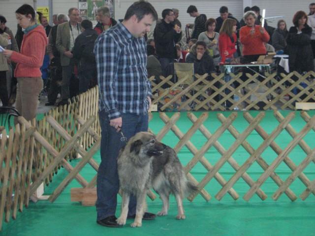 2009 CAC Winter Winner Celje - foto