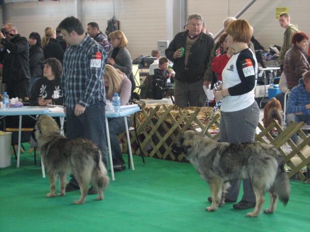 2009 CAC Winter Winner Celje - foto povečava