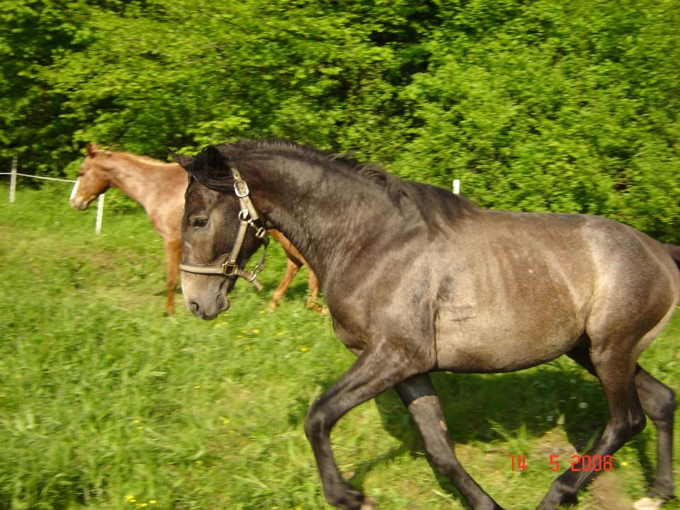 Moji konji - foto povečava