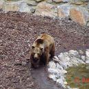 Medved Jaka...