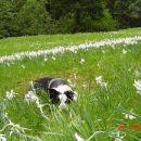 Našla en konček zemlje brez rožic, da si odpočijem.