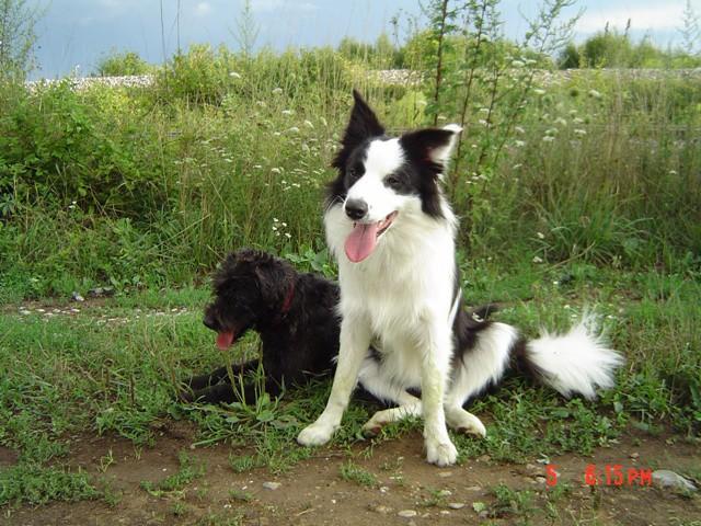 Veni&Ben (05.08.2006) - foto povečava