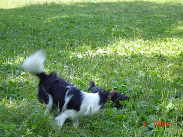 Veni&Ben (05.08.2006) - foto