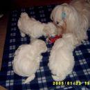 Sheila, Betty Blue, Bingo in Blondie