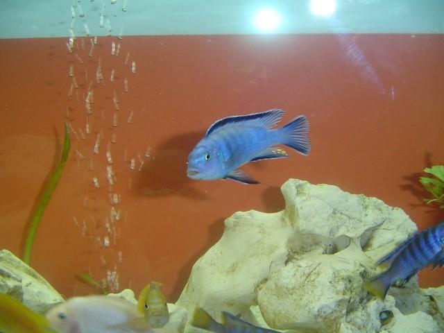 Moj akvarij - foto