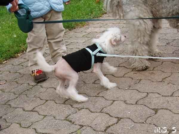 Cosmo, Tara, Lin - 6. 11. 2007 - foto
