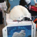 Lady Victory del Baffin