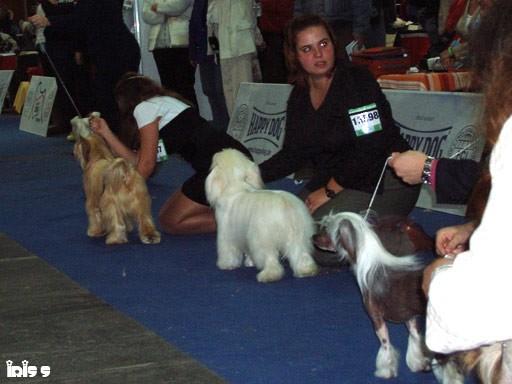 Euro Dog Show Budapest 08 - foto