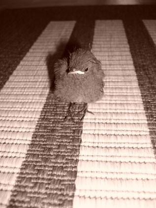 živalce - foto