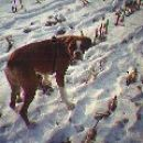 Skakanje po snegu