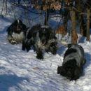 kokici na snijegu