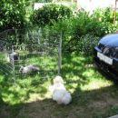 Lotty in zajček