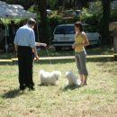 <<< CACIB Zadar 3.5.2008 sodnik: HANS VAN DEN BERG (NL)