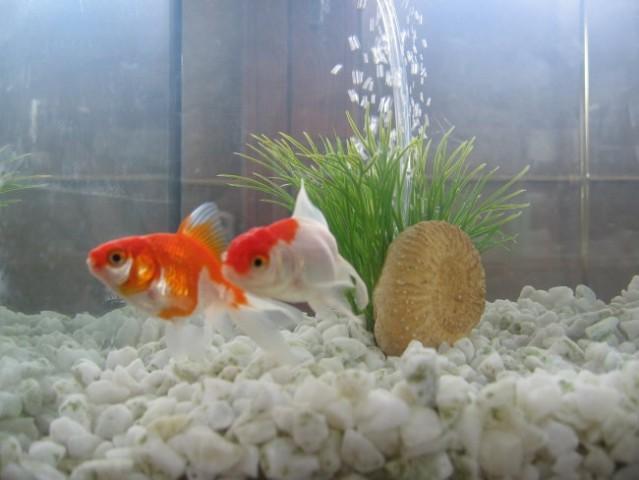 Moji novi ribici