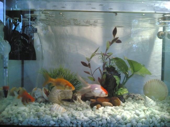 Ribice - foto povečava