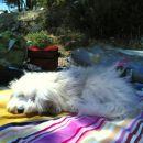 Lotty uživa na plaži na Hvaru