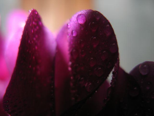 Po dežju... - foto