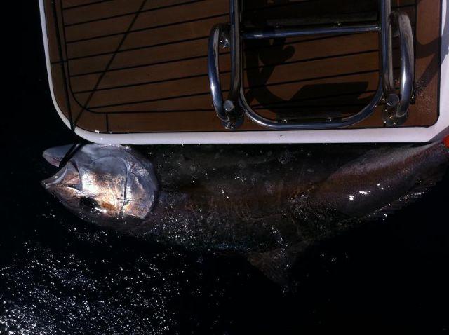 Ribičija 1 - foto